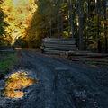 Lesní cesta