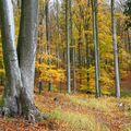 Bloumání podzimní přírodou...