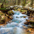 Lesní potok