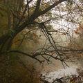 Podzimní poezie u řeky