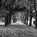 Podzim v sadech