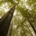 Beskydský prales