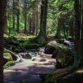 Šumavské toulky - Hamerský potok