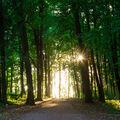 Jedna lesní