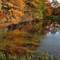 Podzim u Zimního rybníka