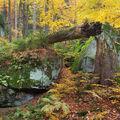 Ve valašském pralese