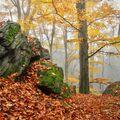 Podzimní kouzlo lesa