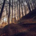 Pohádkovej les