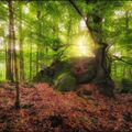 Kámen, slunce, strom