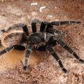 21. letá pavoučice