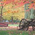 Vinice pohlcena podzimem