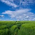 Odpolední pole / Afternoon Field