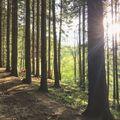 Slunce si cestu vždy najde