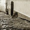 Kozí ulice