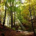 Lesní kouzla