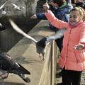Rozhánění holubů