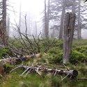 tajemný les