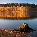 Podzimní pařez