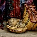Hlídač krámku na tržnici