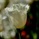 Jaro na kolonádě