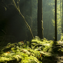 Lesní probouzení