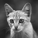 Kotě z Tbilisi