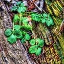 dřevo a rostlina v HDR