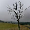Jako suchej starej strom...