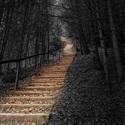 Schody v lese