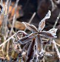 Zimní květina