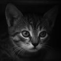 Koťan