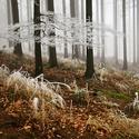 Zimní kontrasty II.