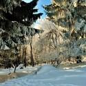 Sněhová tiha