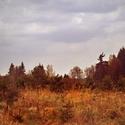 lesní objevy