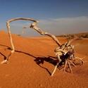 V poušti