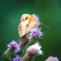 Motýl z minivýletu 2