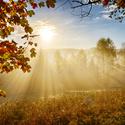 Šumava - ranní mlha u Mechova