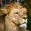 Já, jsem král
