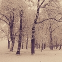 Zima v parku