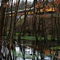 Klánovický les.