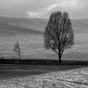 Černobílá zima II