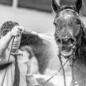 Ošetřovatel a kůň