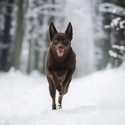 Milovnice sněhu