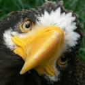 pozor - vyletí ptáček