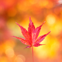 Vzpomínky na podzim..