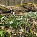 Jaro v lužním lese...
