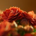 Jemné květinové opojení