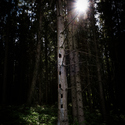 Stromový panelák