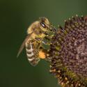 Včelička ...