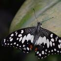Motýlí mezi přistání